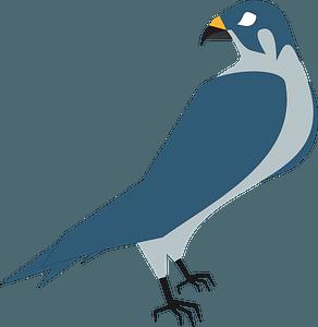 Hawk falcon clipart