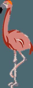 Flamingo bird clipart