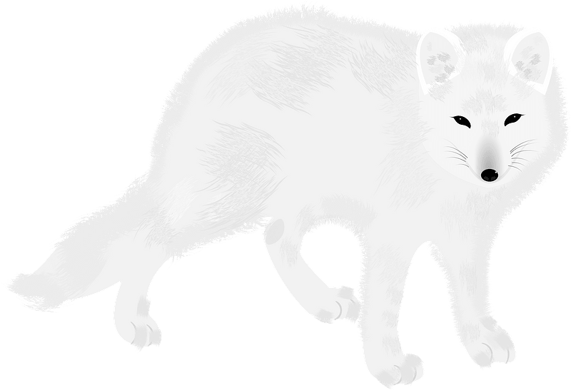 Arctic Fox Silhouettes On The White Background Royalty Free Cliparts,  Vectors, And Stock Illustration. Image 54049281.