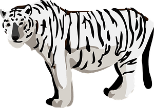 White tiger animal 클립 아트