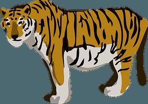 Tiger animal 클립 아트