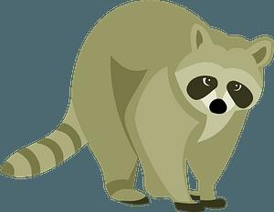 Raccoon animal clipart