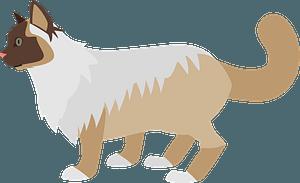 Ragdoll Cat clipart