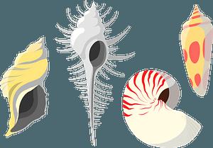 Shellfish shells clipart