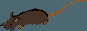 Brown Rat clipart