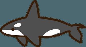 Killer whale orca clipart