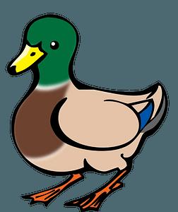 Male mallard bird clipart