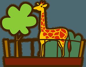 Giraffe in the zoo clipart