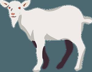 Goat clipart