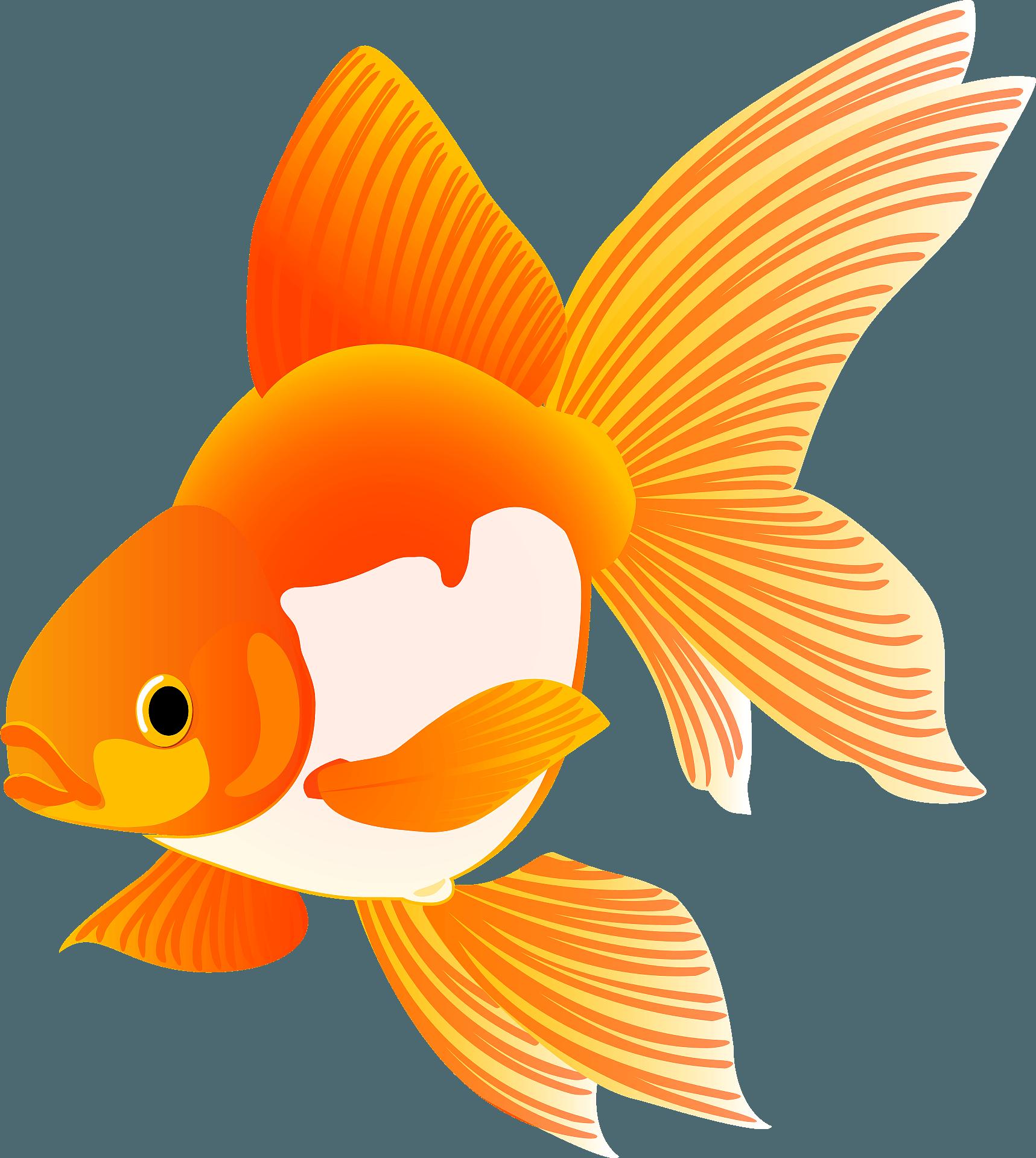 Clown Fish Clipart - Cartoon Fish, Cliparts & Cartoons - Jing.fm