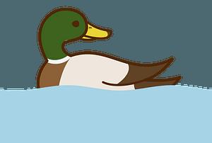 Duck bird clipart