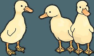 Duckling bird clipart