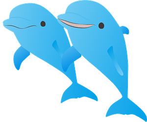 Dolphins 클립 아트