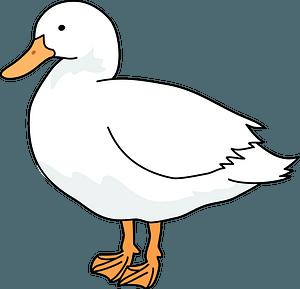 Domestic duck bird clipart