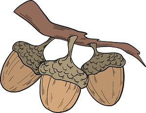 Acorns on a branch clipart