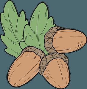 Acorns clipart
