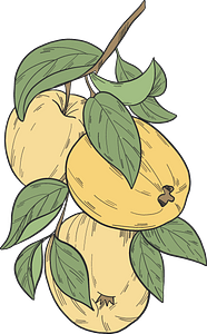 Yellow apples on a branch clipart