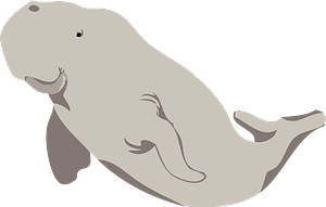 Beluga whale clipart