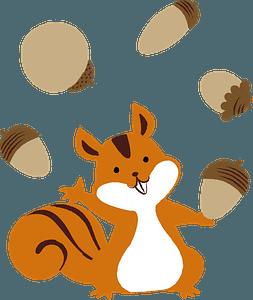 Squirrel animal acorn clipart