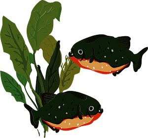 Piranha fish clipart