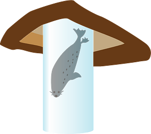 Spotted seal animal clipart