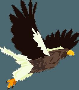 Hawk bird clipart