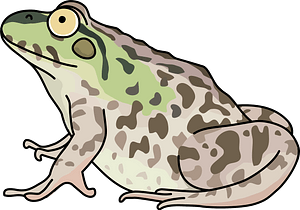 Dark-Spotted Frog clipart