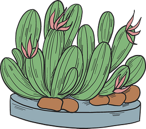 Cactuses clipart