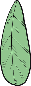 Cranberry leaf clipart