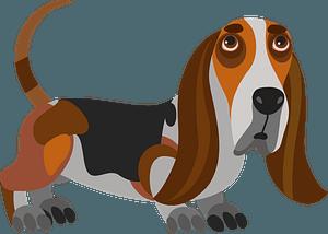Basset Hound dog clipart