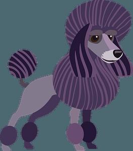 Poodle dog clipart