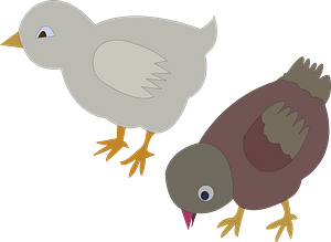 Two Chickens clipart