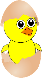 Funny chick coming out from the egg with a eggshell hat clipart