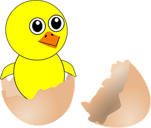 Funny newborn chick coming out from the egg clipart