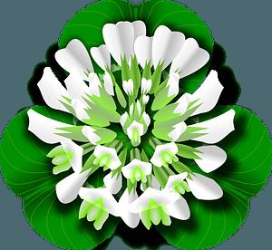 White clover flower clipart