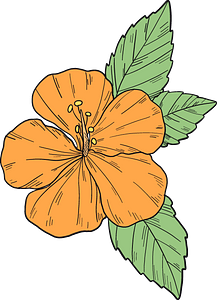 Orange hibiscus flower clipart