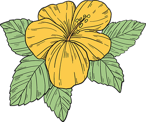 Yellow hibiscus flower clipart