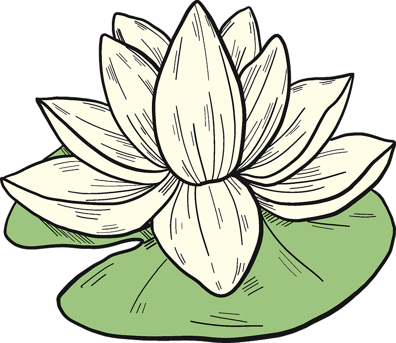 White water lily clipart