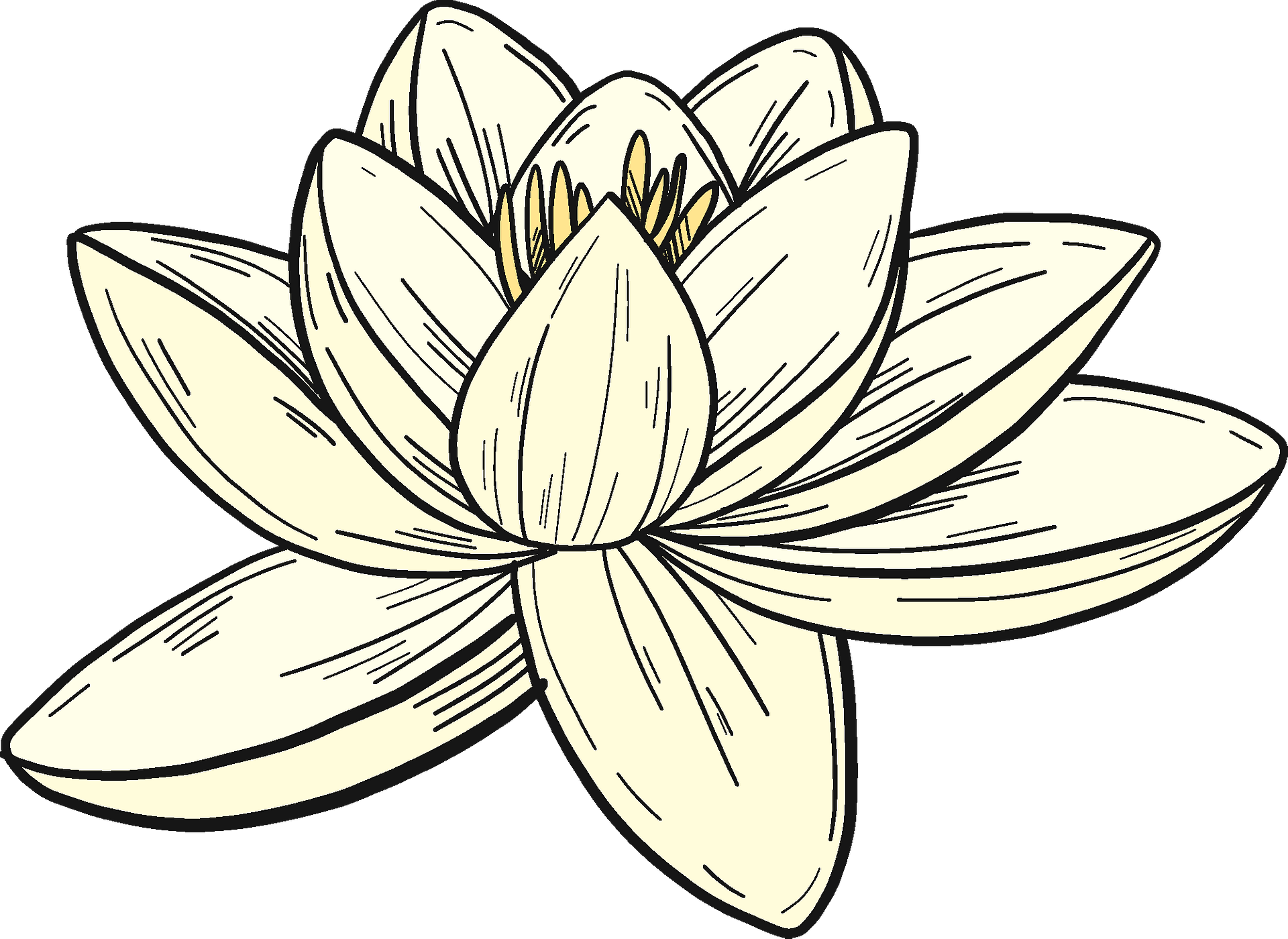 Lily Flower Cartoon clipart - Flower, Lily, Plant, transparent clip art