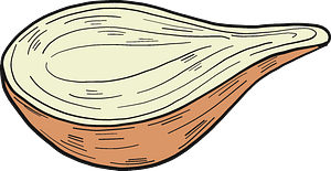 Half onion clipart