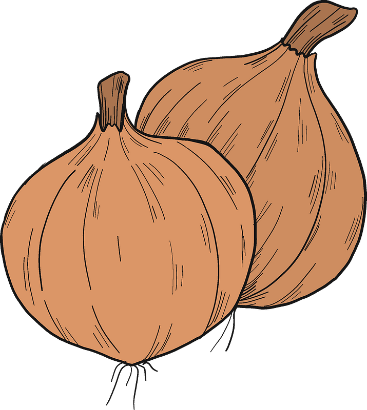 Onions clipart