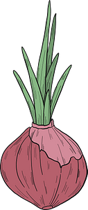 Sprouted onion clipart