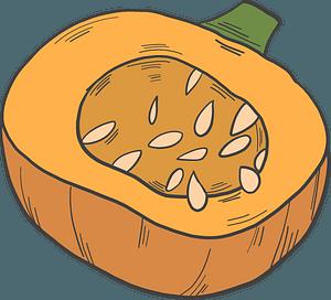 Half pumpkin clipart