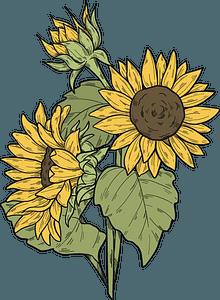 Sunflowers clipart