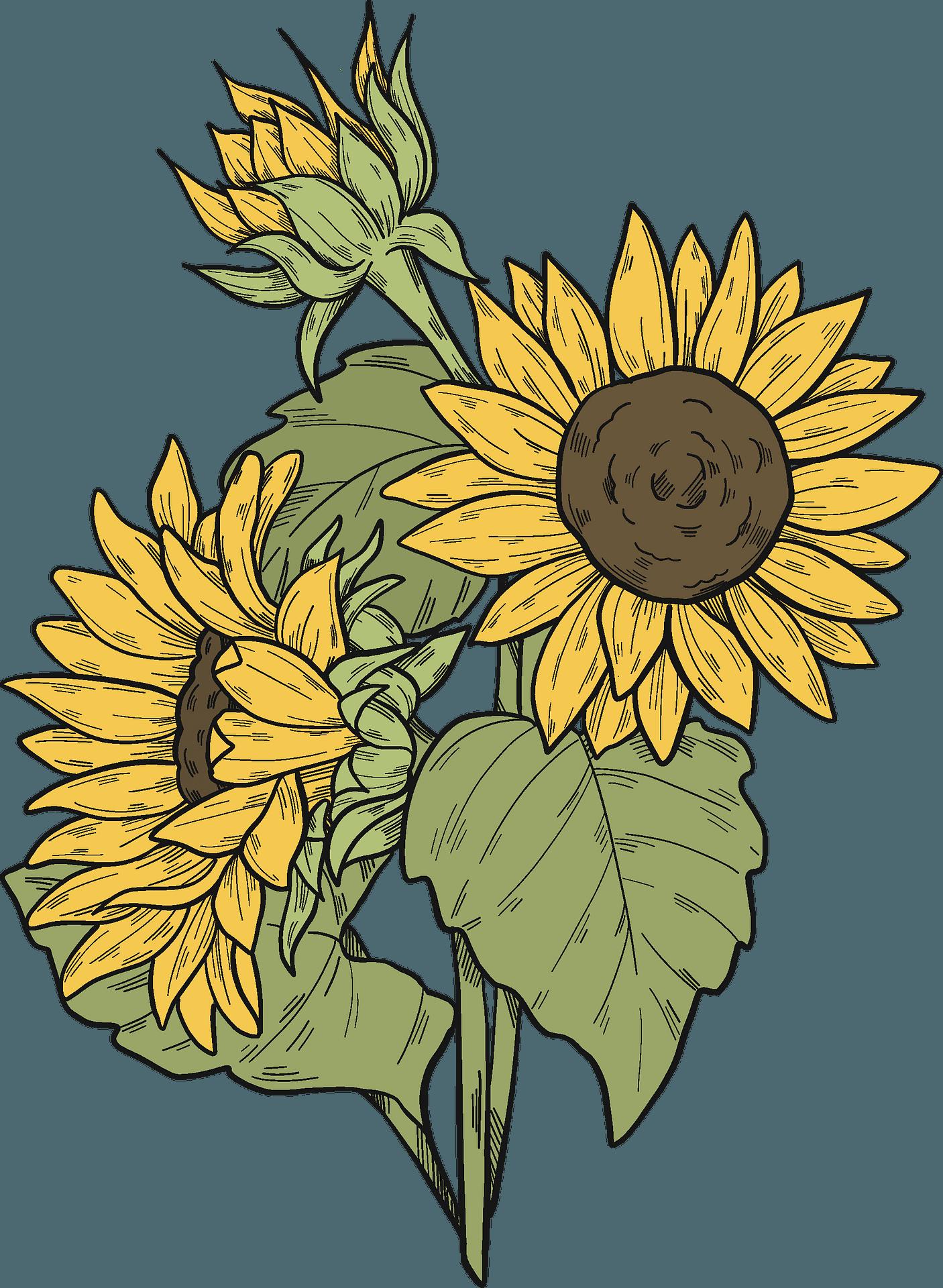 Sunflower Clipart : Sakura Tucson