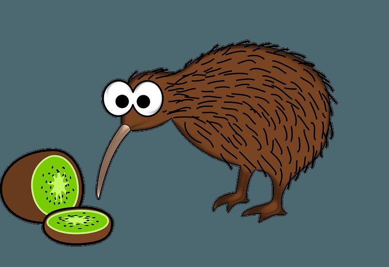 Kiwi Fruit and Kiwi Bird clipart
