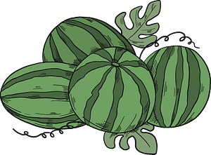 Watermelons clipart
