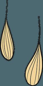 Wheat grains clipart