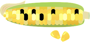 Ear of Multi-colored Corn clipart