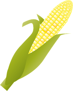 Ear of Corn clipart